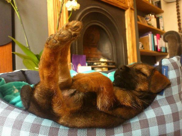 a.baa-Funny-cute-sleeping-dog.jpg