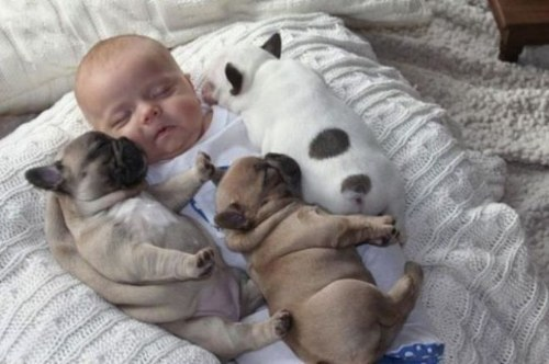 baby-puppies-5.jpg