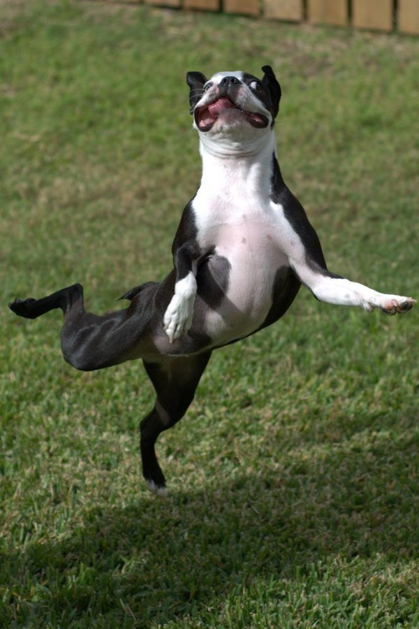 ballet-dog-big-600x900.jpg