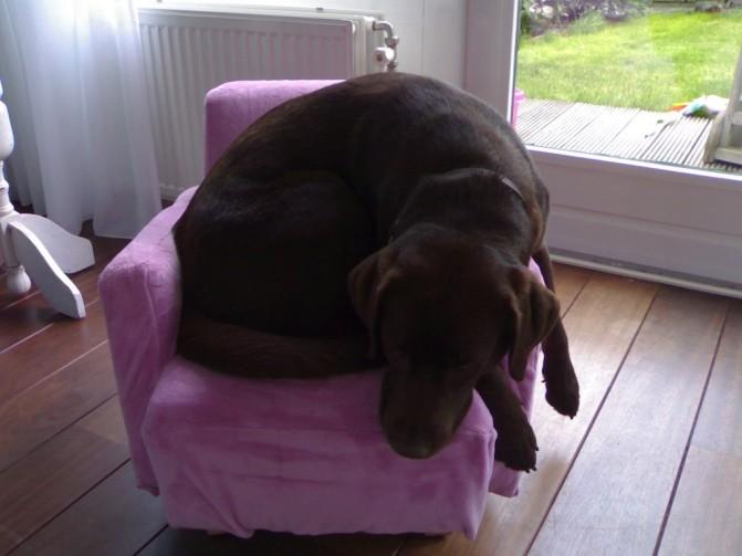 big-dog-small-chair-2-671x503.jpg