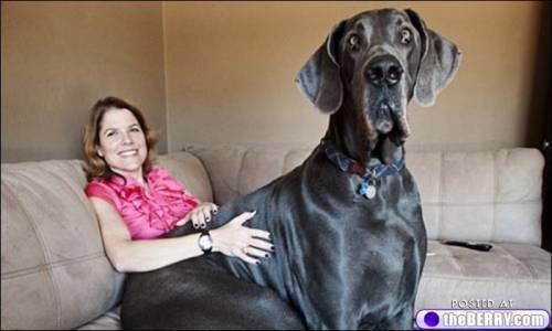 big-dogs-17.jpg