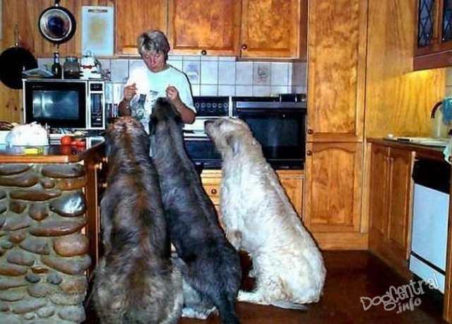 big-dogs02.jpg