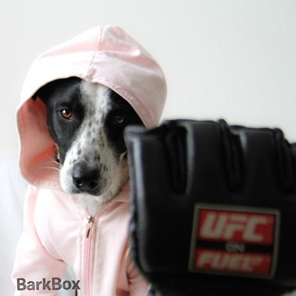 boxingdog-600x600.jpg
