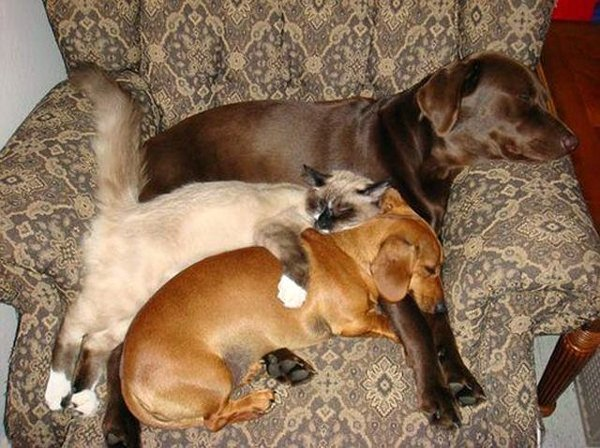 cat-and-two-dogs-sleeping-in-a-chair.jpg