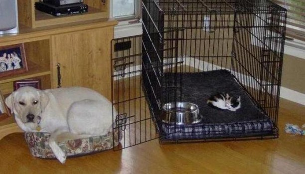 cat-is-in-dog-bed-612x349.jpg