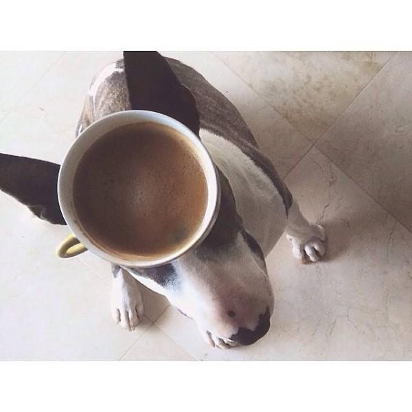 coffeedog-600x600.jpg