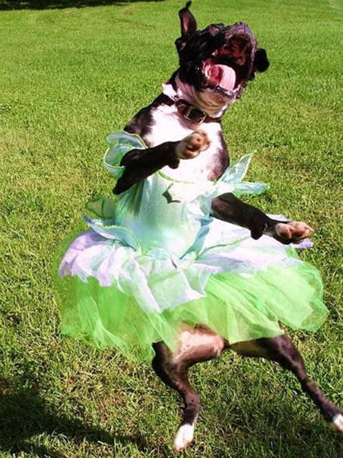 crazy-ballerina.jpg