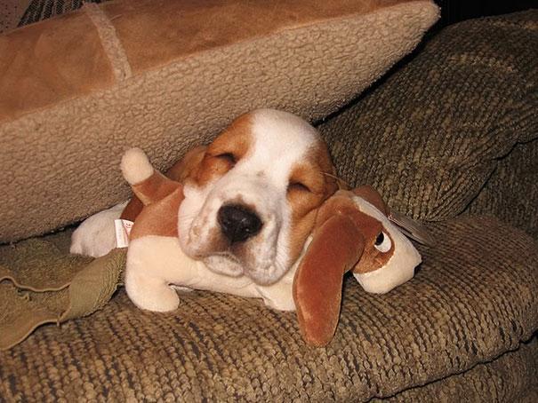 cute-animals-sleeping-stuffed-toys-12.jpg
