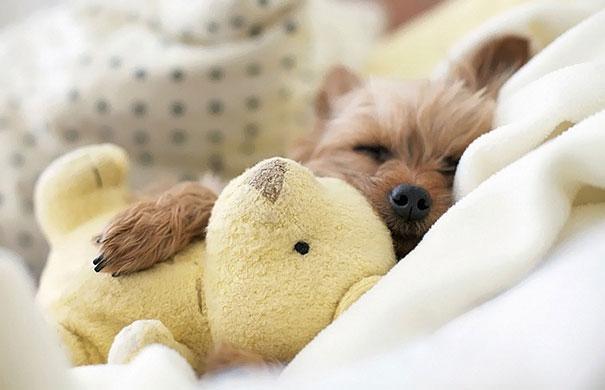 cute-animals-sleeping-stuffed-toys-14.jpg