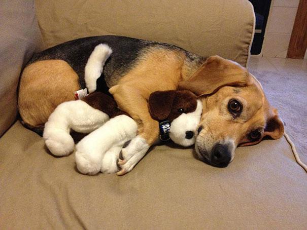 cute-animals-sleeping-stuffed-toys-15.jpg