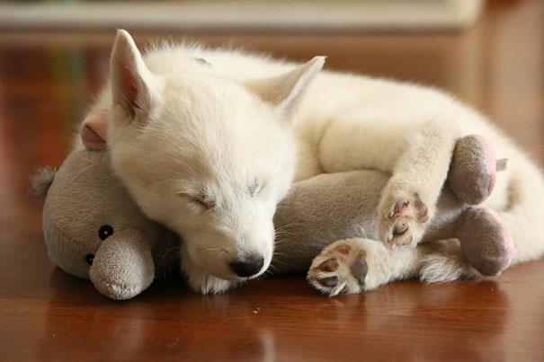 cute-animals-sleeping-stuffed-toys-17.jpg