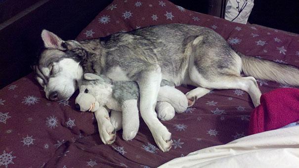 cute-animals-sleeping-stuffed-toys-2.jpg
