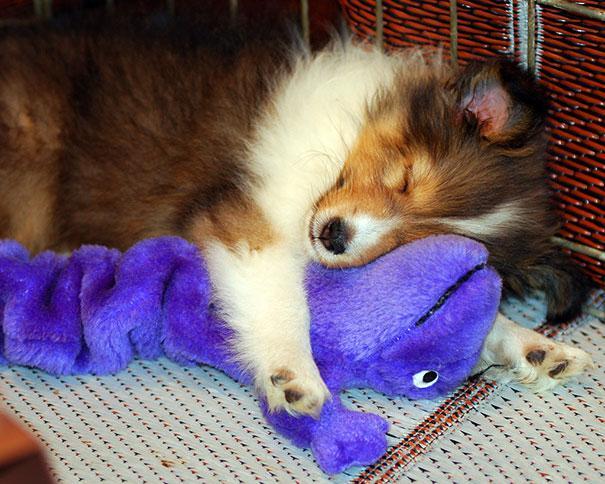 cute-animals-sleeping-stuffed-toys-3.jpg