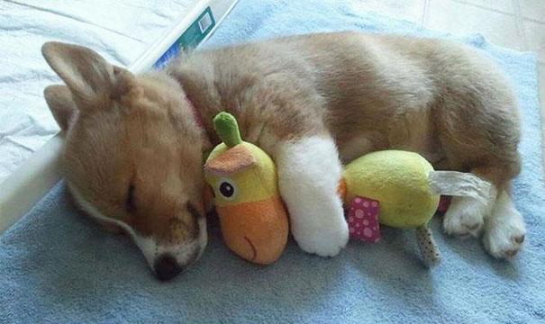 cute-animals-sleeping-stuffed-toys-41.jpg