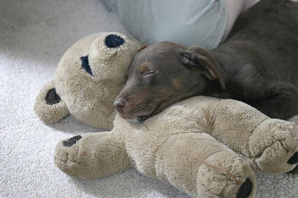 cute-animals-sleeping-stuffed-toys-8.jpg