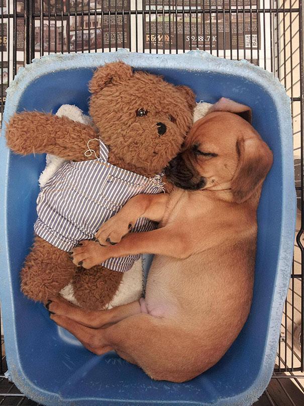 cute-animals-sleeping-stuffed-toys-9.jpg