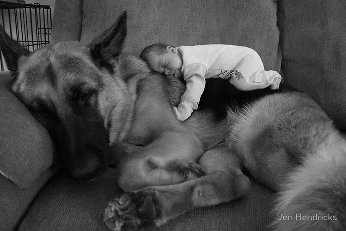 cute-big-dogs-and-babies-1.jpg