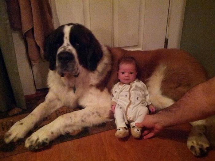 cute-big-dogs-and-babies-10.jpg