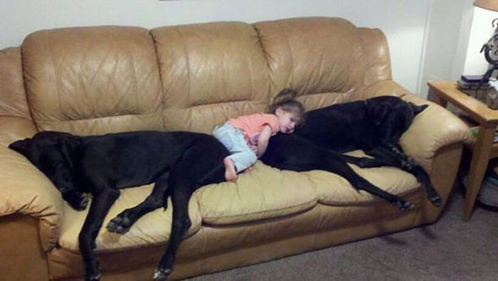 cute-big-dogs-and-babies-11.jpg