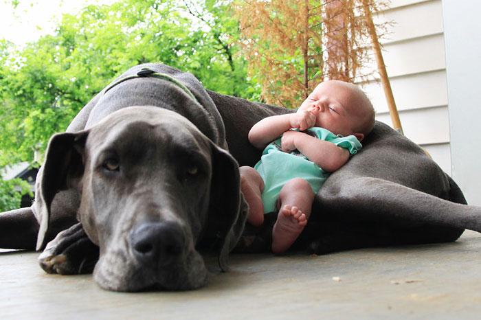 cute-big-dogs-and-babies-12.jpg