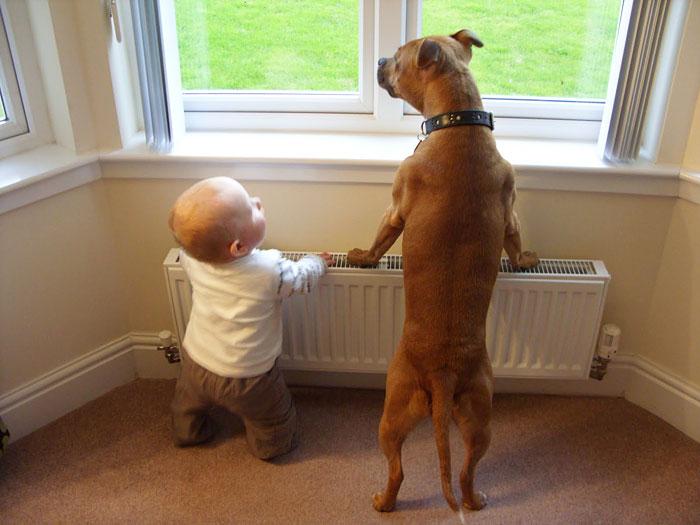 cute-big-dogs-and-babies-13.jpg
