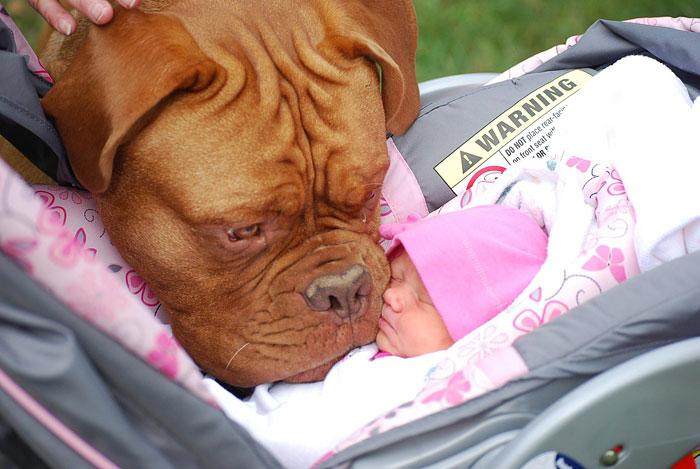 cute-big-dogs-and-babies-15.jpg