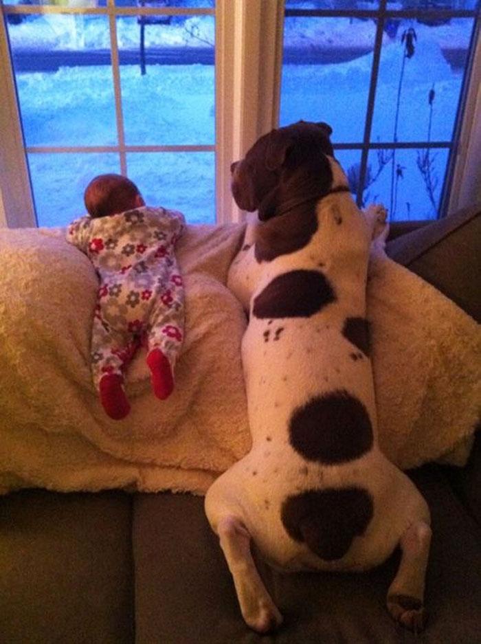 cute-big-dogs-and-babies-2.jpg