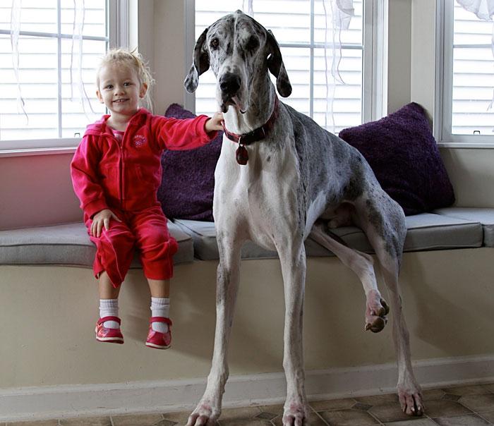 cute-big-dogs-and-babies-21.jpg