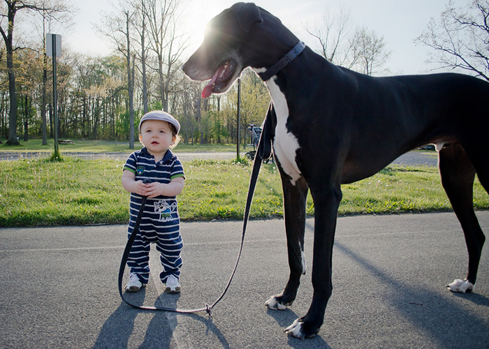 cute-big-dogs-and-babies-29.jpg