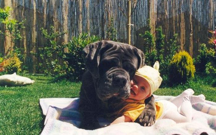 cute-big-dogs-and-babies-3.jpg