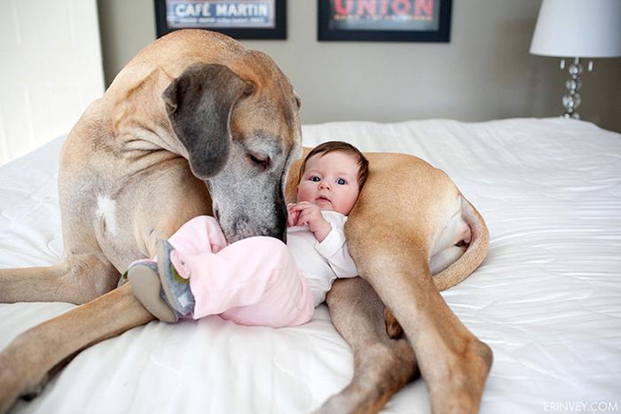 cute-big-dogs-and-babies-31.jpg