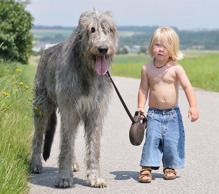 cute-big-dogs-and-babies-33.jpg