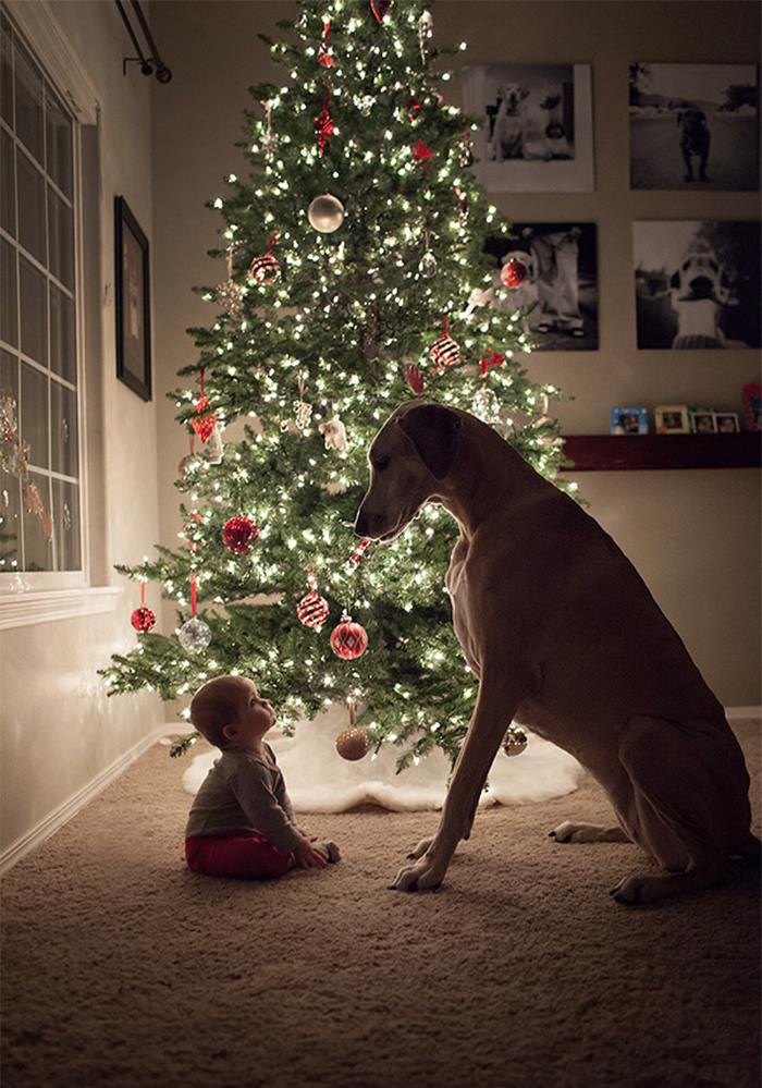 cute-big-dogs-and-babies-34.jpg