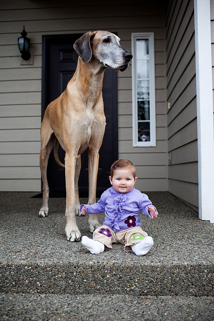 cute-big-dogs-and-babies-35.jpg