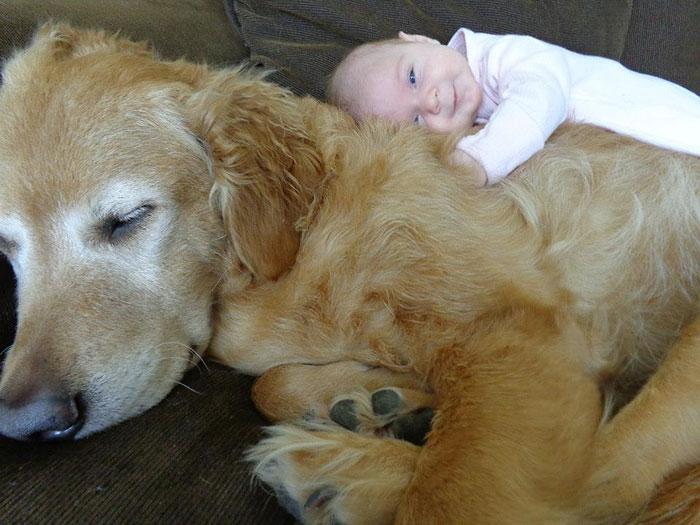 cute-big-dogs-and-babies-6.jpg