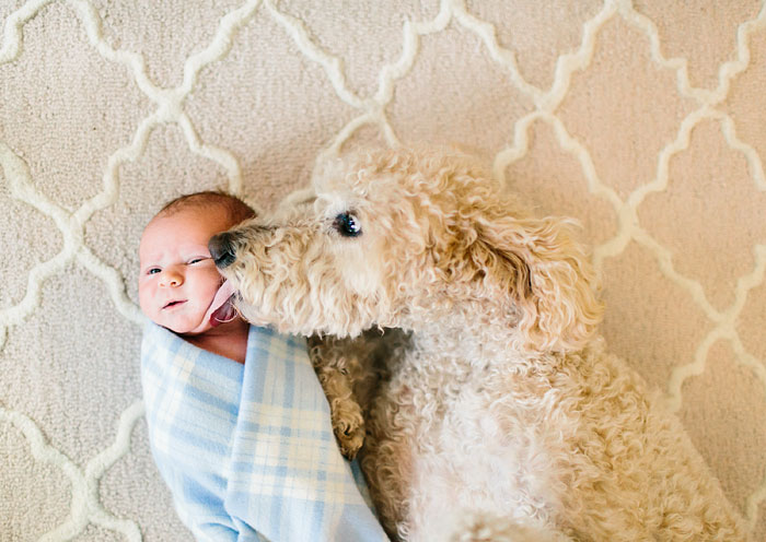 cute-big-dogs-and-babies-8.jpg