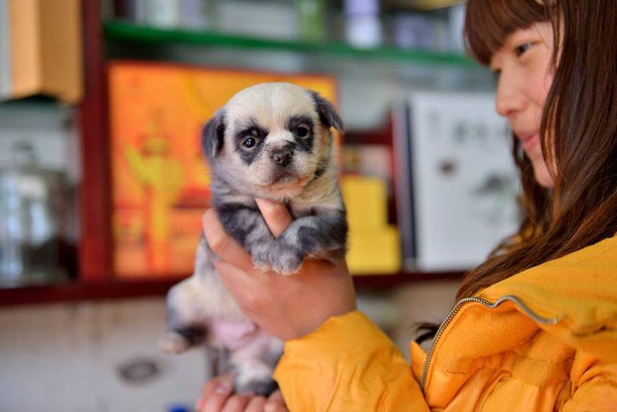 cute-dog-panda-puppies-4.jpg
