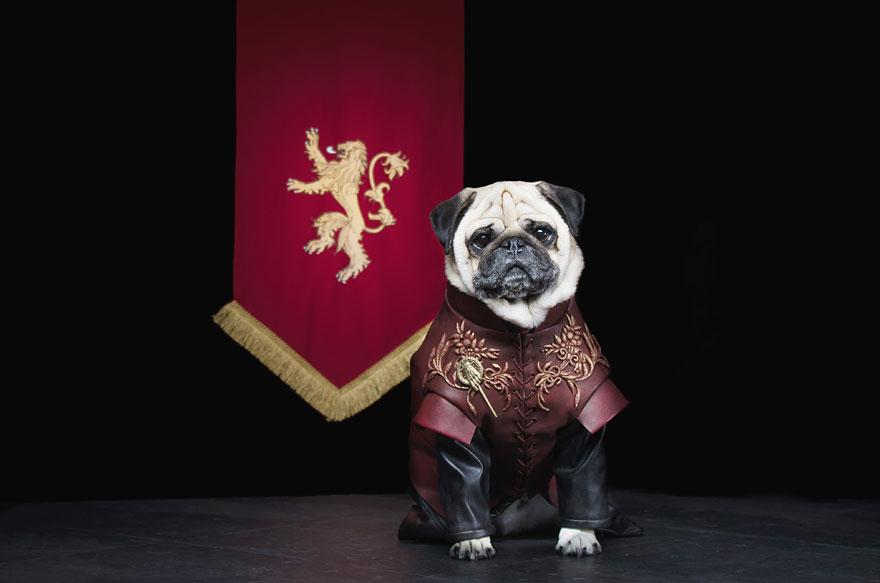 cute-pugs-game-of-thrones-pugs-of-westeros-3.jpg