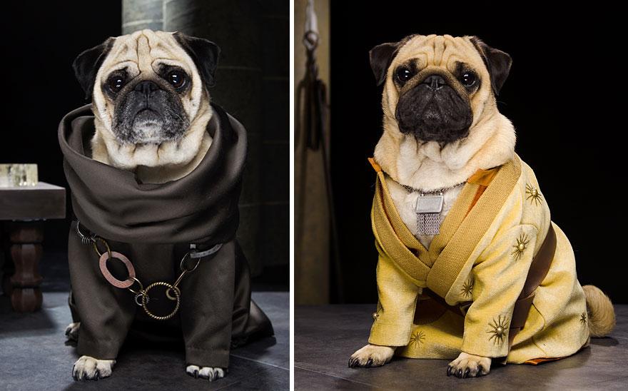 cute-pugs-game-of-thrones-pugs-of-westeros-6.jpg
