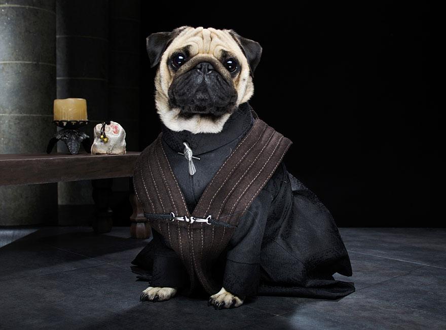 cute-pugs-game-of-thrones-pugs-of-westeros-7.jpg