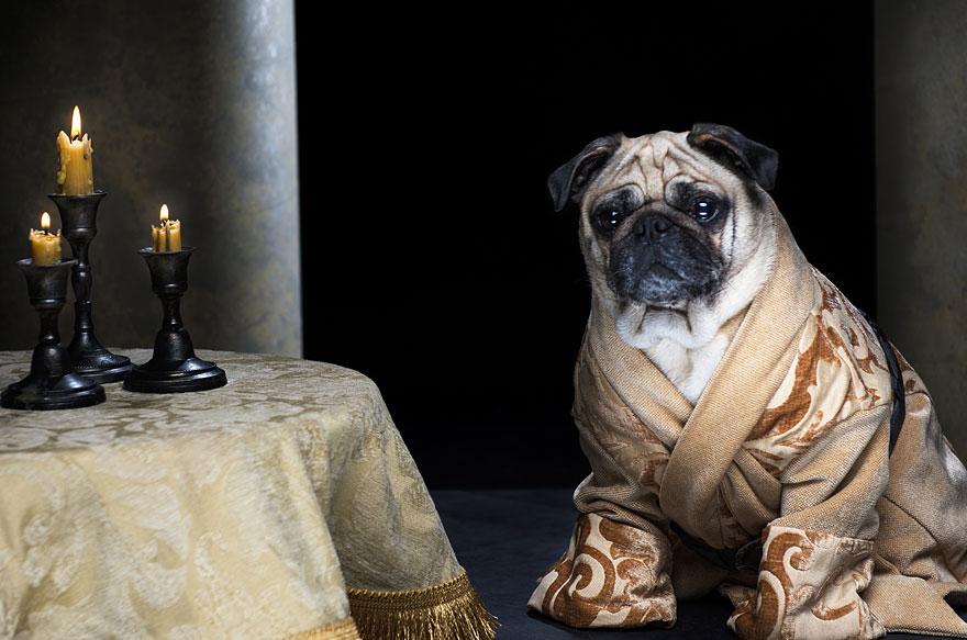 cute-pugs-game-of-thrones-pugs-of-westeros-8.jpg