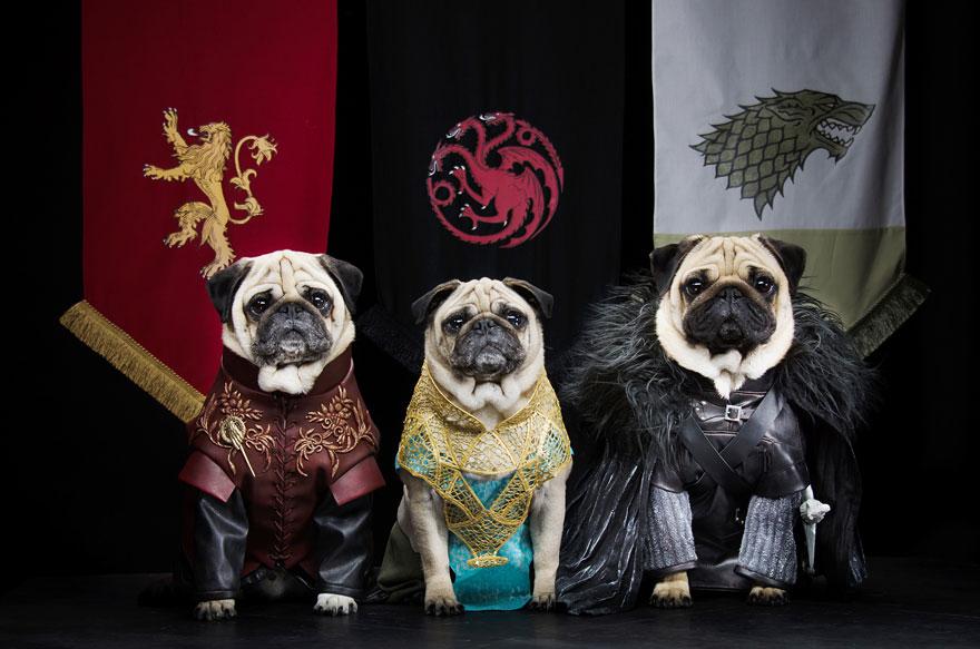 cute-pugs-game-of-thrones-pugs-of-westeros-9.jpg