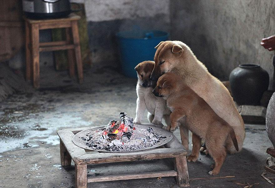 cute-puppies-barking-cold-stove-1.jpg