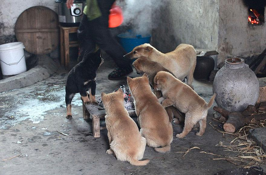 cute-puppies-barking-cold-stove-2.jpg