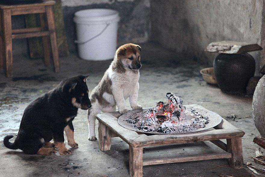 cute-puppies-barking-cold-stove-3.jpg