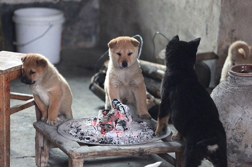 cute-puppies-barking-cold-stove-4.jpg