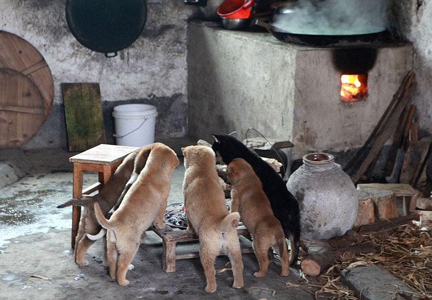 cute-puppies-barking-cold-stove-5.jpg