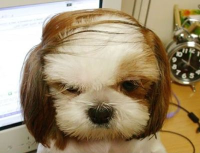 cute_pics-funny_pictures_of_animals-3751_1876_donald-trump-dog.jpg
