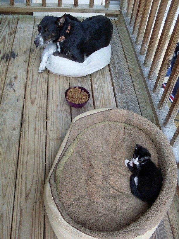 dog-and-cat-on-beds-612x815.jpg