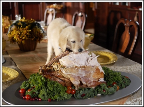 dog-and-turkey.jpg